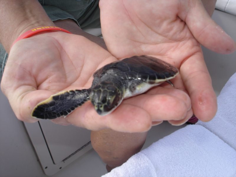Coyuca Lagoon Tour in Acapulco and Baby Turtle Release $59.00-$69.00 USD